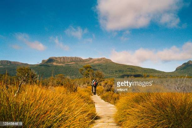 rearview male hiker hiking on a wooden boardwalk in tasmania - tasmania stock pictures, royalty-free photos & images