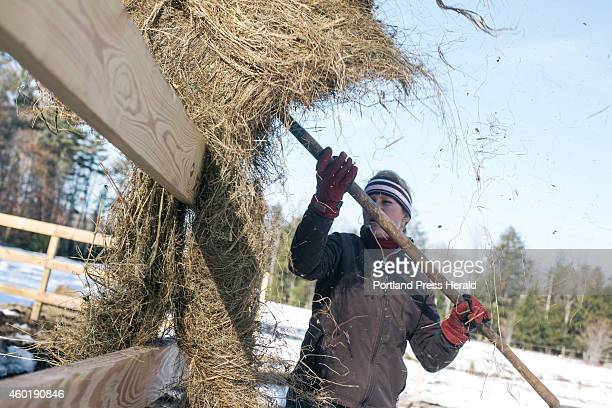 Rebecca Nelson forks hay to her animals on her acreage in Scarborough, ME on Tuesday, December 2, 2014.