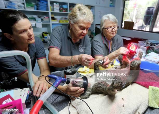 Rebecca Turner Barbara Barrett and Sheila Bailey treat a koala named Sharni from Crowdy Bay National Park for burns at The Port Macquarie Koala...