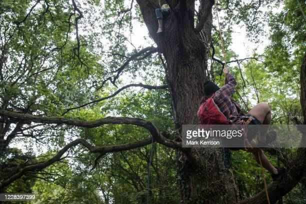 HS2 Rebellion tree protectors climb a mature oak tree in Denham Country Park in order to try to prevent its felling as part of works for the HS2...