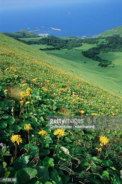 Rebun Island coastline and mountain flowers, Hokkaido, Japan
