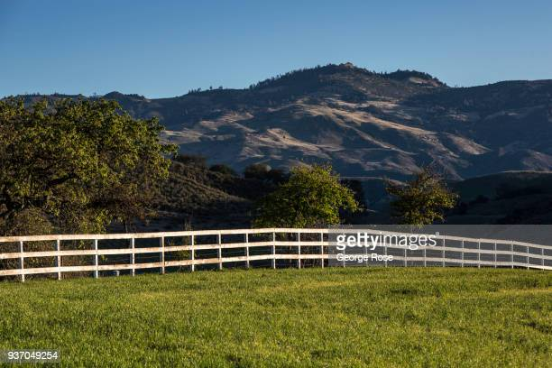 Recent rains have turned grass pastures and vineyards in Happy Canyon green as viewed on March 19 near Santa Ynez California Because of its close...