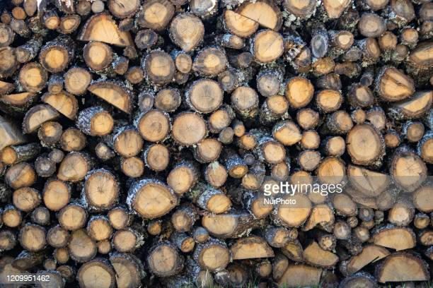 Recent stack of wood in the forest Piles of logs cut for firewood as seen in Frakto Forest Rhodope or Rodopi mountain range and National Park in...
