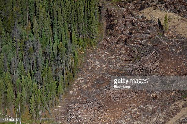 A recently logged section of pine trees is seen in this aerial photograph taken above a forest near Whitecourt Alberta Canada on Thursday June 4 2015...