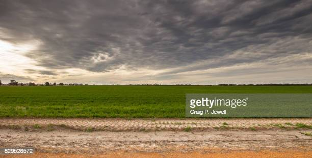 Recently Planted Green Wheat Field Under a Gloomy Sky