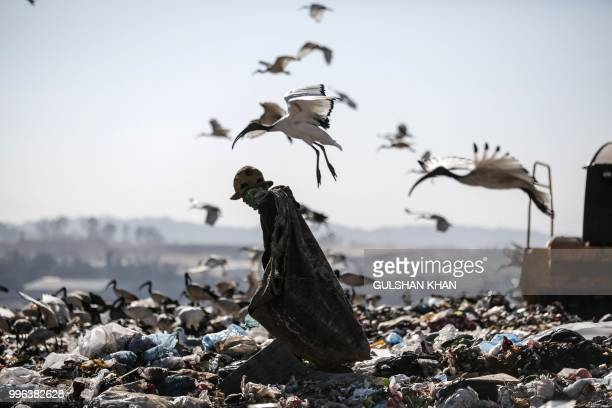 TOPSHOT A reclaimer wades through the waste at Robinson Deep landfill Johannesburg's largest landfill on June 29 2018