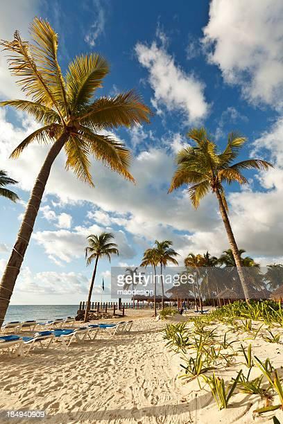 sillas de playa reclinable, palmeras y palapas, méxico - playa del carmen fotografías e imágenes de stock