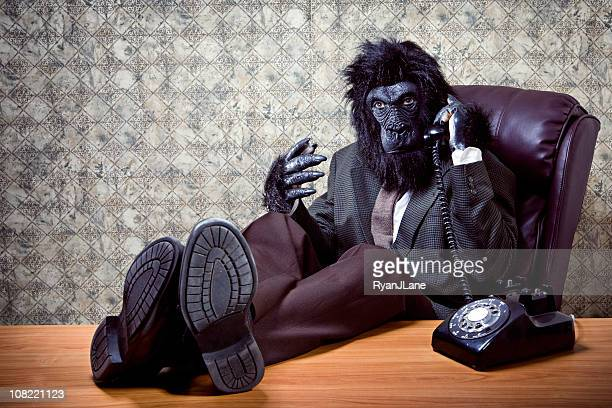 reclining business gorilla on a phone call - monkey suit stock pictures, royalty-free photos & images