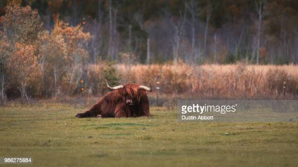reclining redhead - dustin abbott stock pictures, royalty-free photos & images