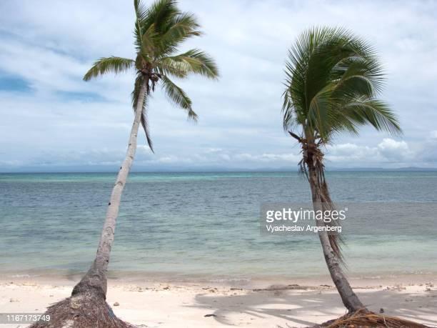 reclining tropical palm trees under heavy wind, malapascua island beach, philippines - argenberg stock-fotos und bilder