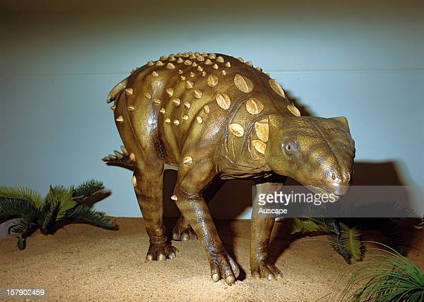 Reconstructed dinosaur Minmi a small armoured dinosaur an ankylosaur An almost complete fossil skeleton was discovered in 1990 Richmond Marine Fossil...