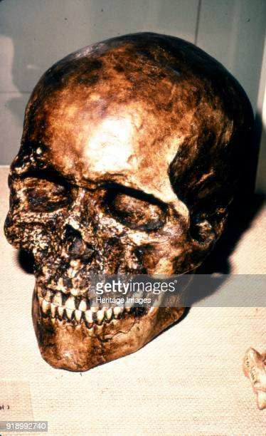 Reconstructed Skull of Cromagnon Man, c20th century. Cro-Magnon is a common name used to describe the first early modern humans that lived in the...