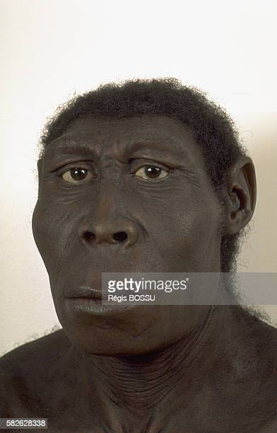 Reconstruction of 'Homo Erectus' between 40000 and 18 million years old