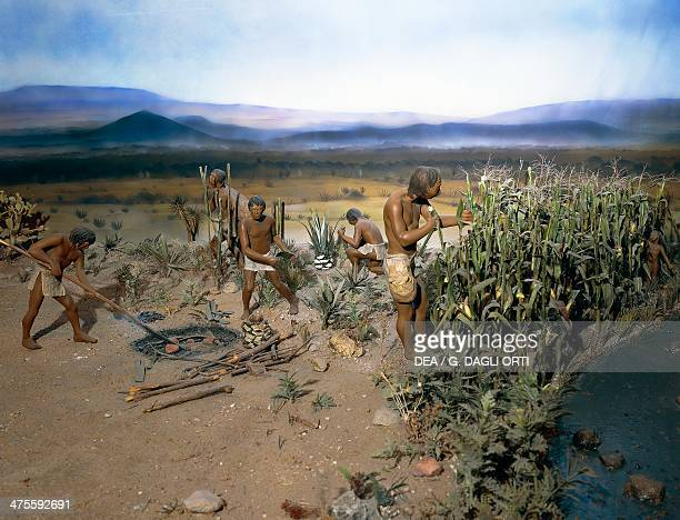 Reconstruction of maize cultivation by a sedentary fisher communities of the Valley of Tehuacan ca 3400 BC Mexico Mexico City Biblioteca Nacional De...