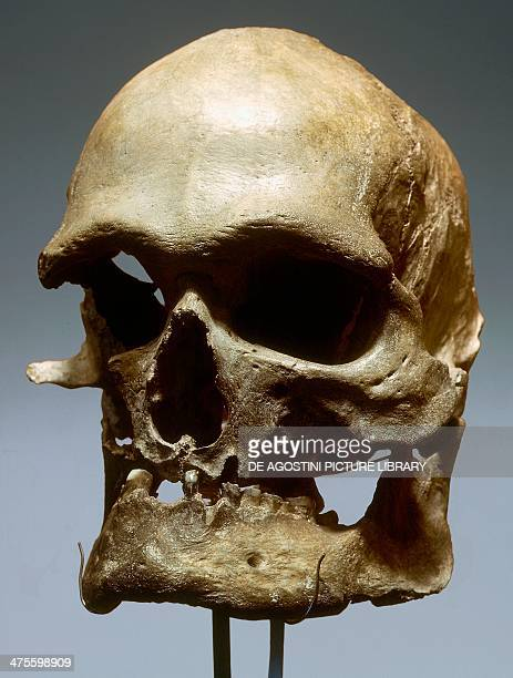 Reconstruction of the skull of Cromognon man who later evolved into modern man and were widespread in the Upper Paleolithic Bonn Rheinisches...
