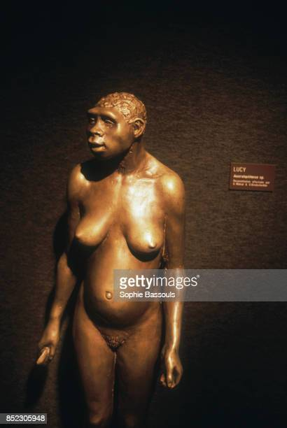A reconstruction of what Lucy may have looked like Discovered in 1974 Lucy was until 1995 the oldest known example of an Australopithecus afarensis...