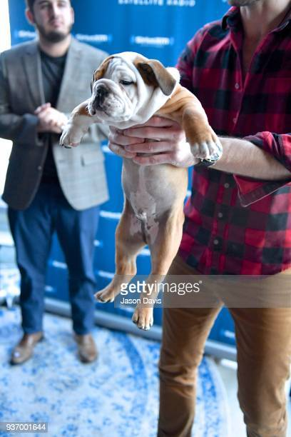 Recording Artist Ryan Hurd's dog Pancake visits SiriusXM Host Storme Warren on March 21 2018 in Nashville Tennessee