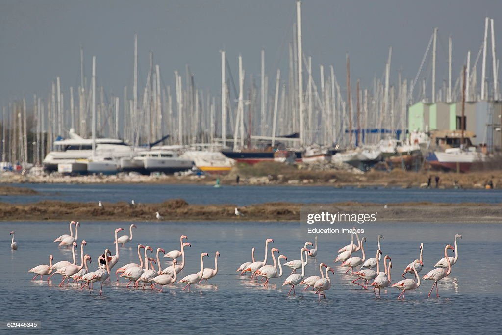 Recreational Craft Marina Of Port St Louis Du Rhone Pictures Getty