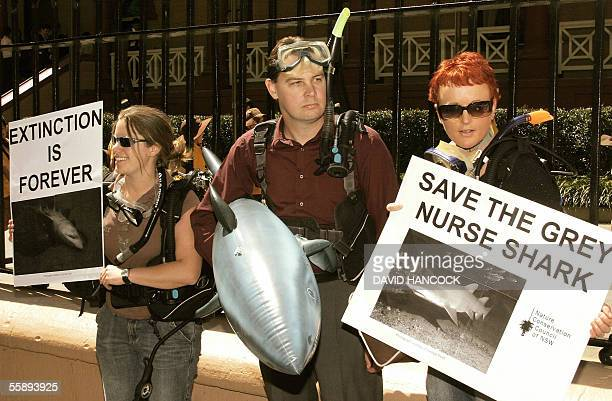 Recreational divers stand outside the New South Whales Parliament holding an inflatable toy shark as a protest against the government's refusal to...