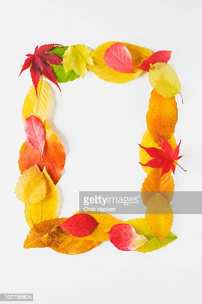 Rectangle of autumn leaves