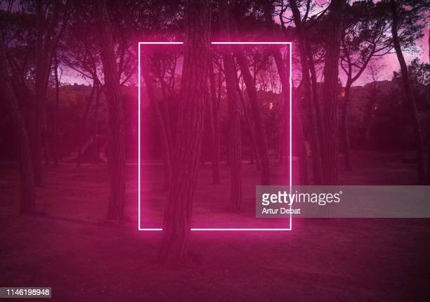 rectangle red light neon between pine trees with futuristic visual effect. - portão - fotografias e filmes do acervo