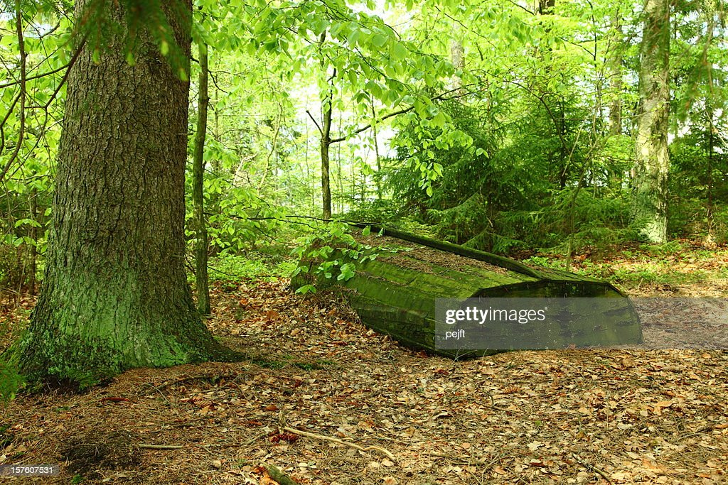 Recycling a wooden dinghy in the light green spring forest : Stock Photo