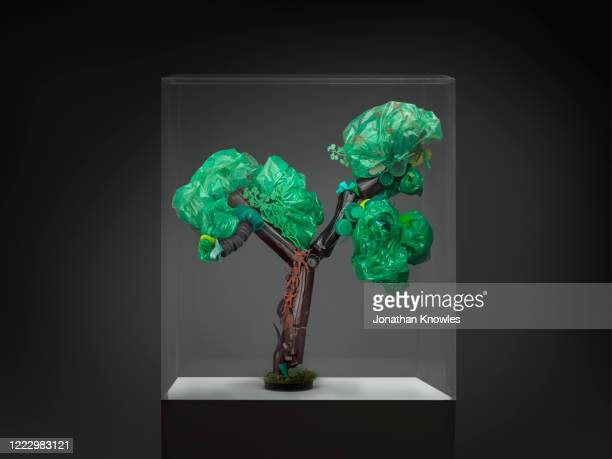 recycling gallery exhibition  - recycled tree in glass box - extinct stock pictures, royalty-free photos & images