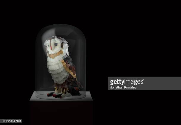 recycling gallery exhibition   - recylced plastic owl in glass dome - extinct stock pictures, royalty-free photos & images