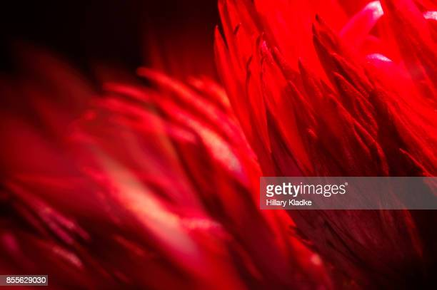 Red abstract of a flower