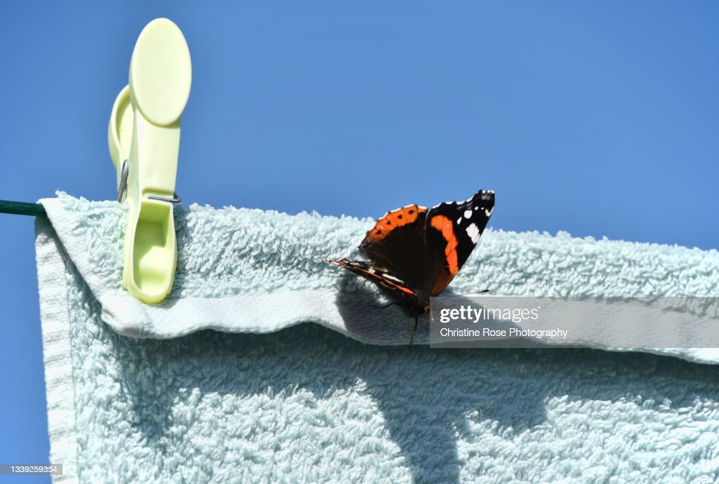 Red Admiral Hanging With The Washing High-Res Stock Photo ...