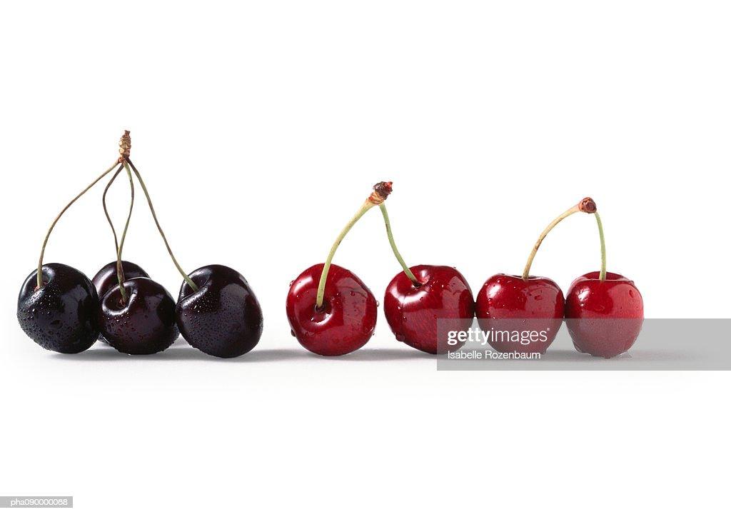 Red and black cherries, white background : Stockfoto