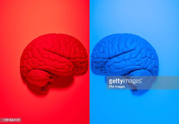 red and blue brains facing off - democracy stock pictures, royalty-free photos & images
