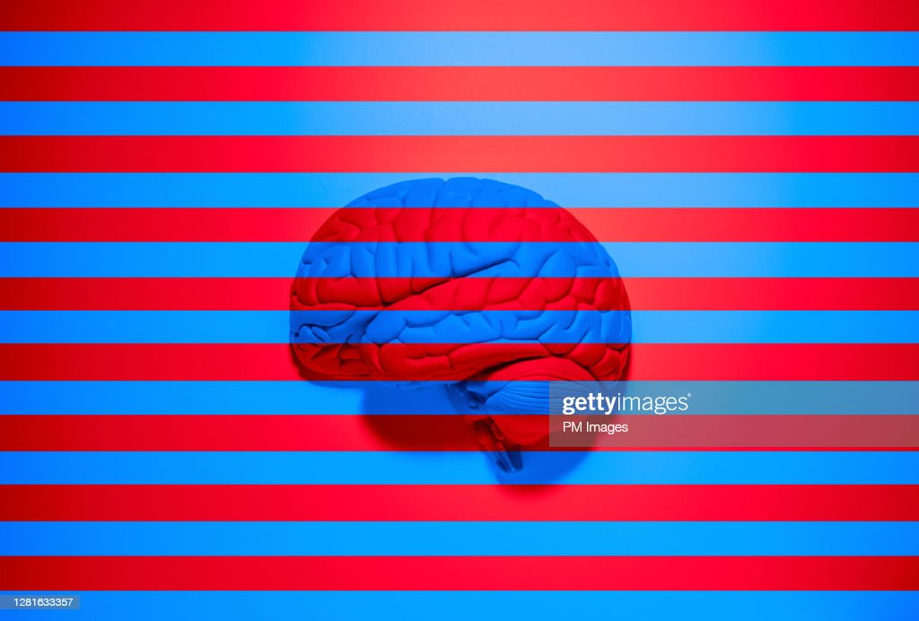 Red and blue stripes over brain : Stock Photo