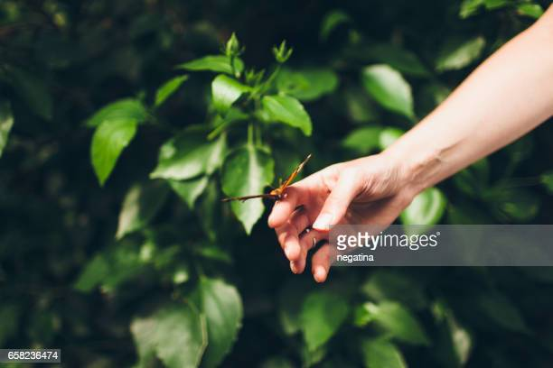 red and brown butterfly sitting on the hand of young woman