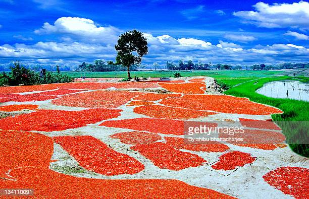 red and green landscape, bangladesh - bangladesh village stock photos and pictures