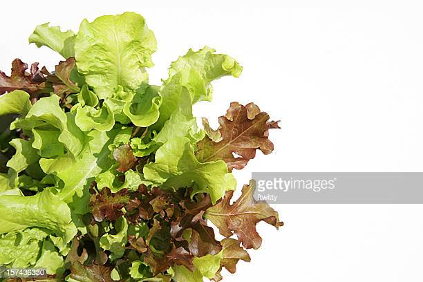 red and green leaf lettuce isolated on white - leaf lettuce stock photos and pictures
