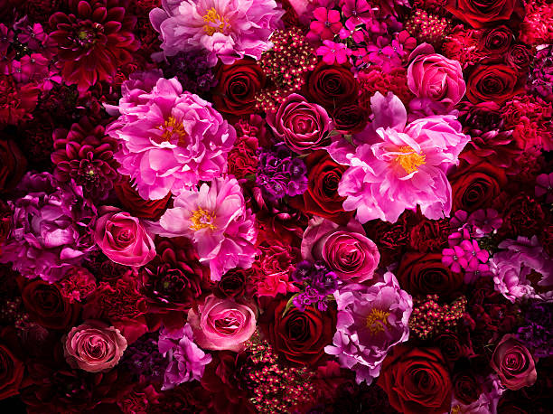 Red And Pink Cut Flowers, Close Up Wall Art