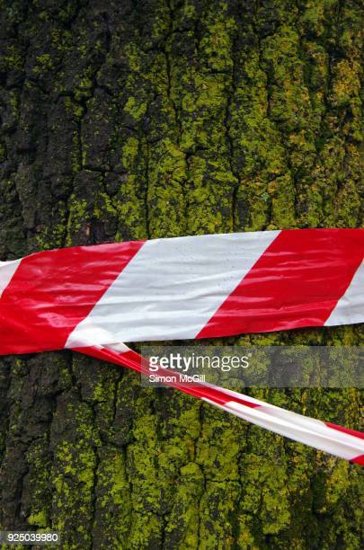 Red and white striped plastic hazard tape wrapped around a mossy tree trunk