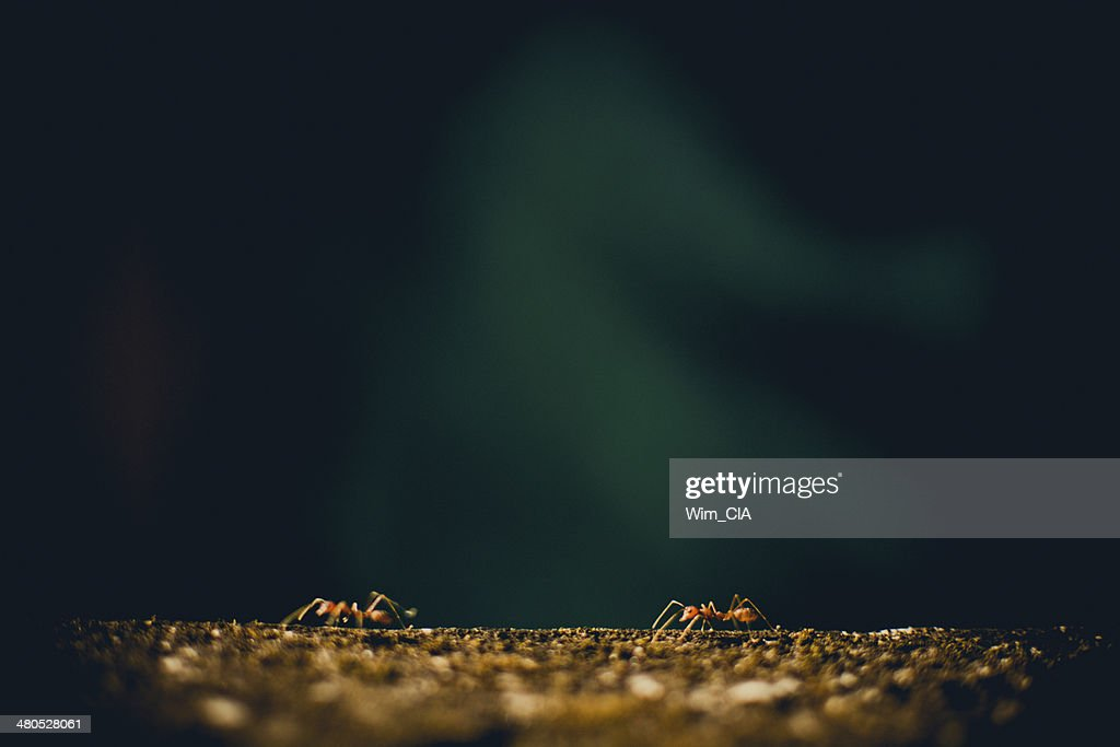 red ant on the wall : Stock Photo