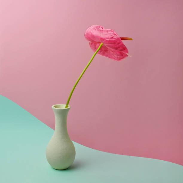 red anthurium in white vase