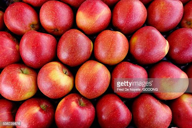 red apples. - sallanches stock pictures, royalty-free photos & images