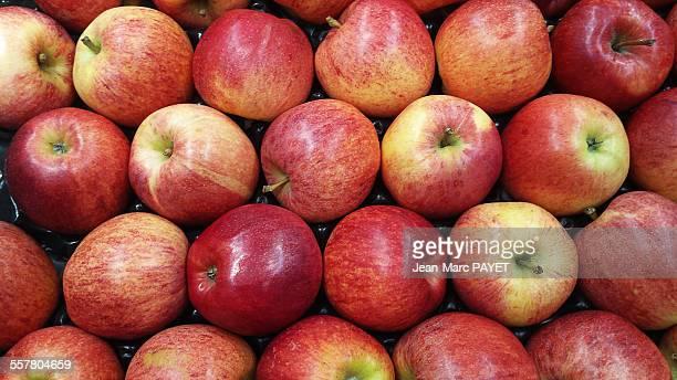 red apples - jean marc payet imagens e fotografias de stock