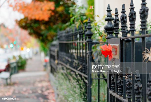 A red autumn leaf in a black mailbox