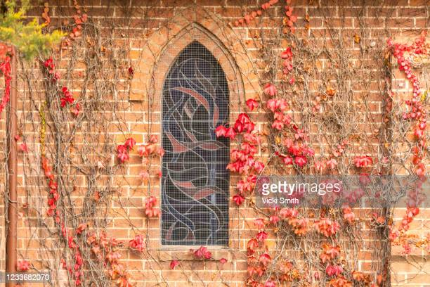 red autumn leaves on vines around a old brick church stain glass windows - tamworth australia stock pictures, royalty-free photos & images