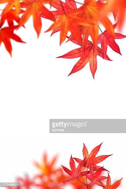 Autunno foglie su sfondo bianco