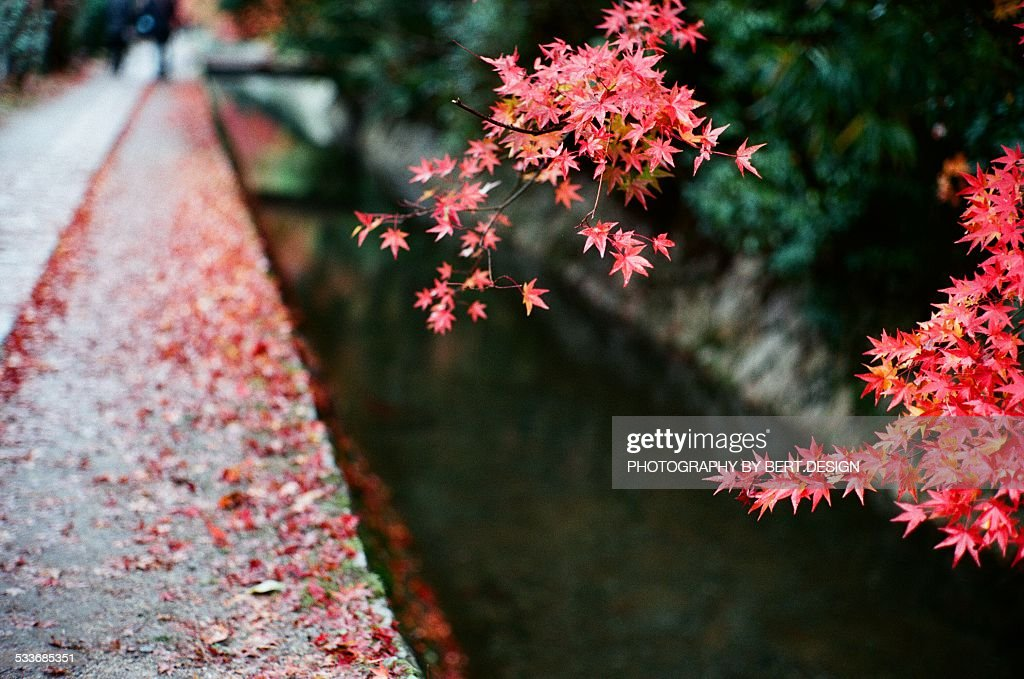 Red autumn leaves : Foto stock