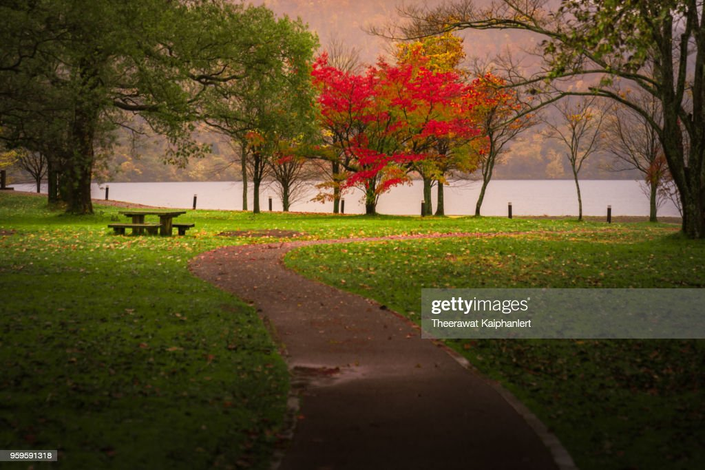 Red autumn tree among green tree in the park : Stock-Foto