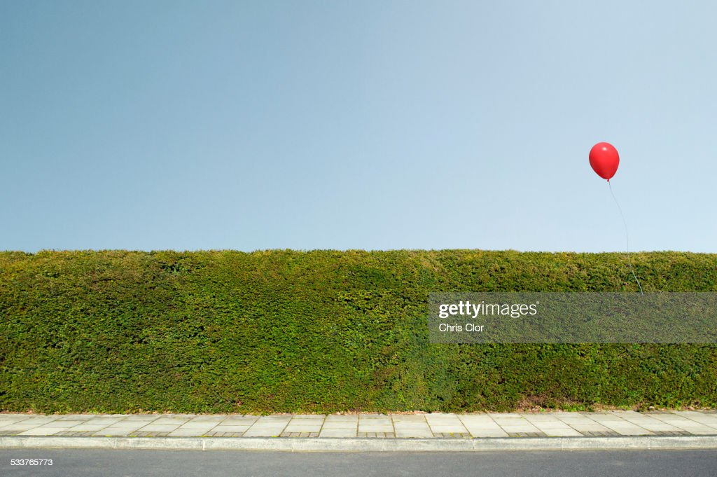 Red balloon floating over neatly trimmed hedges : Foto stock