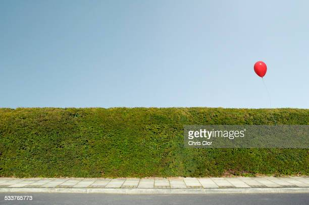 red balloon floating over neatly trimmed hedges - hedge stock pictures, royalty-free photos & images