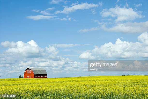 Red Barn and Canola Field One